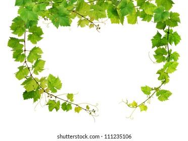 Fresh grapevine frame
