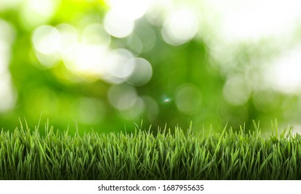 Fresh grass against blurred green background. Spring time