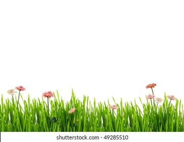 Fresh grass and daisies, isolated on white background