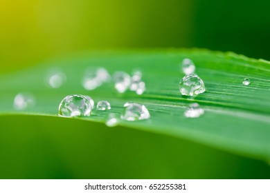Fresh grass and dew drops with sun light