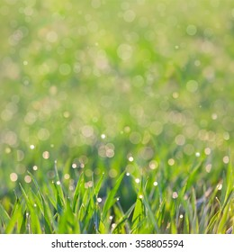 Fresh Grass with drops of dew and amazing defocused bokeh background, focus on the front