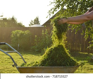 Fresh grass in a garden trolley. Cleaning of freshly mown grass in the garden. Hay mowing on a summer day in July.