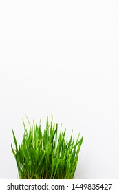 Fresh grass on concrete background