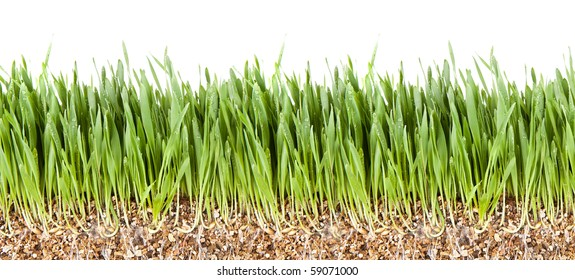 Fresh Grass Root Underground Cross Section Backgrounds