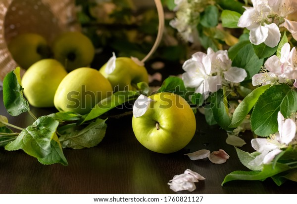Fresh green apples, wicker basket and blossom branches in on dark wooden background. Selective focus.