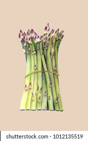 Fresh green asparagus. Isolated object on beige background. Watercolor botanical illustration. Organic Food. Vegetarian Ingredient. Realistic style. Hand painted poster or print.