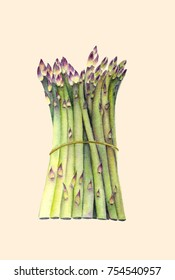 Fresh green asparagus. Isolated object on light beige background. Watercolor botanical illustration. Organic Food. Vegetarian Ingredient. Realistic style. Hand painted poster or print.