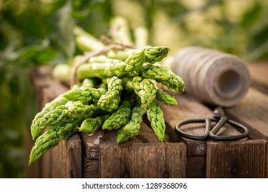 Fresh green asparagus in a rustic greenhouse