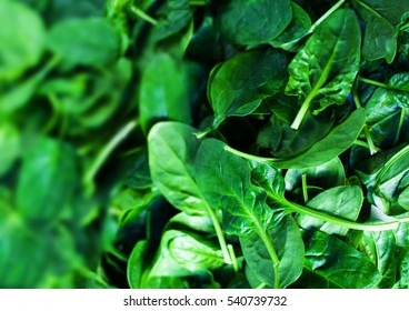 Fresh green baby spinach leaves as background close up.