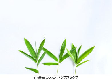 Fresh green bamboo leaves with tiny branch and fine or tapering leaves on isolated white background. Bamboo is evergreen plants and fastest growing in tropical country in asia ,decorate plant concept.