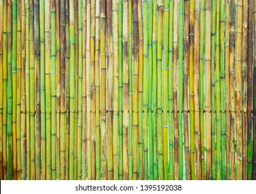 fresh green bamboo plank fence texture for background