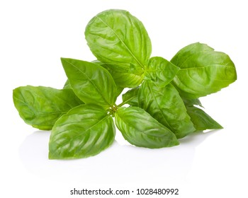 Fresh green basil herb leaves isolated on white background