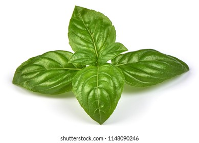 Fresh green basil herb leaves, isolated on white background. Sweet Genovese basil. Close-up.