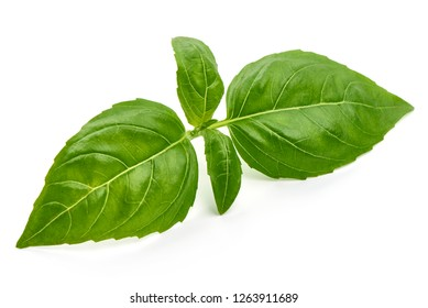 Fresh Green Basil Leaf, close-up, isolated on white background.