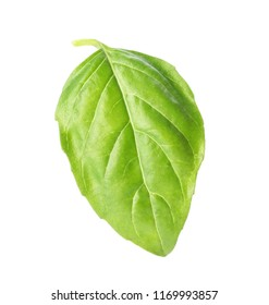 Fresh green basil leaf on white background