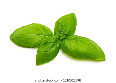 Fresh green basil leaves, close-up, isolated on white background.