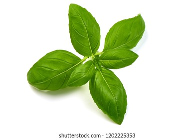 Fresh Green Basil Leaves Herb Spice, closeup, isolated on a white background. Top view.