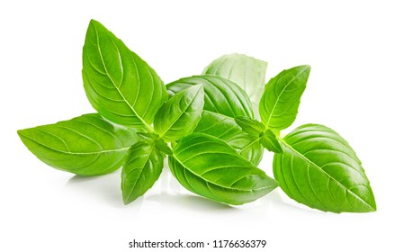 fresh green basil leaves isolated on white background