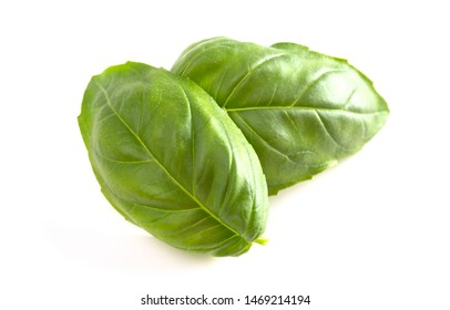 Fresh Green Basil Leaves Isolated on a White Background