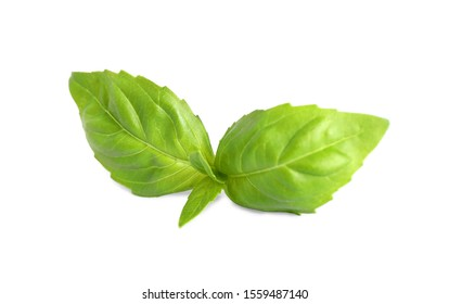 Fresh green basil leaves isolated on white