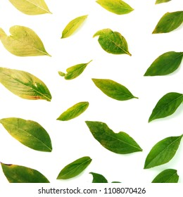 Fresh green basil leaves on white background, top view