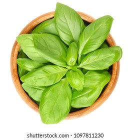 Fresh green basil leaves in wooden bowl. Also great basil or Saint-Joseph's-wort. Ocimum basilicum. Culinary herb. Edible, raw and organic. Isolated macro food photo closeup from above over white.