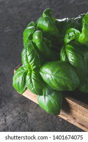 Fresh green basil on a dark background. Food background. Banch of flavorous basil