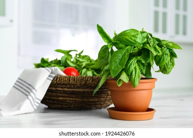 Fresh green basil in pot on white marble table in kitchen