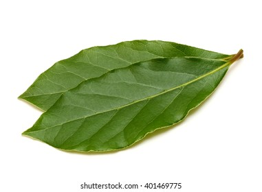 Fresh green bay leaf isolated on white background