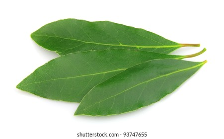 Fresh and green bay leaf on a white background