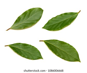 Fresh green bay leaf set isolated on white background