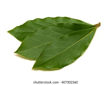 Fresh green bay leafs isolated on white background