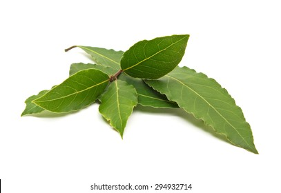 Fresh green bay leaves branch isolated on white background