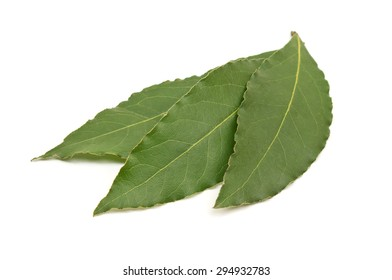 Fresh green bay leaves isolated on white background