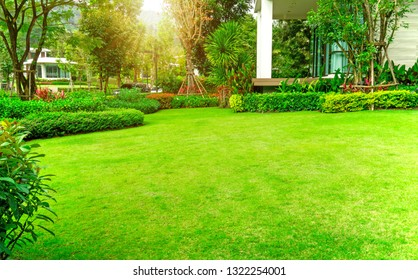 Fresh green Bermuda grass smooth lawn as a carpet with curve form of bush, trees on the background, good maintenance landscapes in a luxury house's garden under morning sunlight
