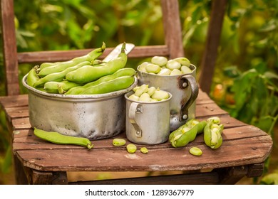Fresh and green broad beans in small greenhouse