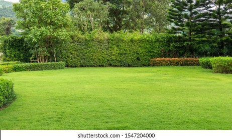 Fresh green burmuda grass smooth lawn as a carpet with curve form of bush, trees on the background, good maintenance lanscapes in a garden under cloudy sky and morning sunlight - Shutterstock ID 1547204000