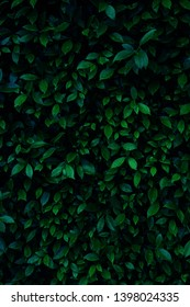 fresh green bush background tropical style