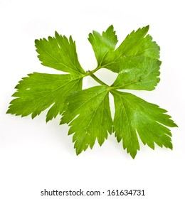 Fresh green celery herb isolated on white background