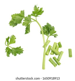 Fresh green celery isolated on a white background