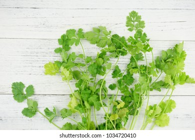 Fresh green cilantro, coriander leaves on wooden surface