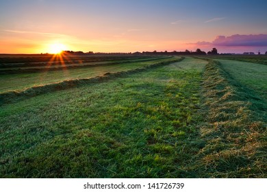 fresh green clipped hay on grassland at sunrise