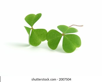 fresh, green clover isolated on white background