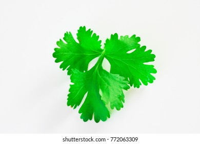 Fresh green coriander leaves isolated on white background