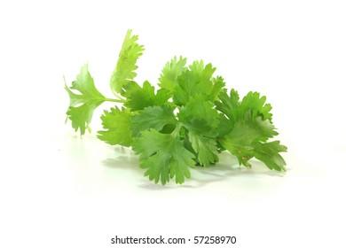 Fresh green coriander on a white background