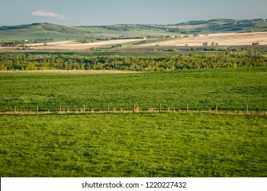 Fresh green countryside of Southern Alberta, province of Canada