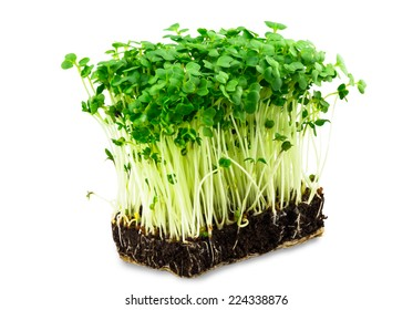 fresh green cress salad on the white background