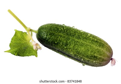 Fresh green cucumber isolated on white background. Vegetarian food.