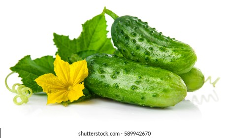 Fresh green cucumber with leaf and flower natural vegetables organic food isolated on white background.