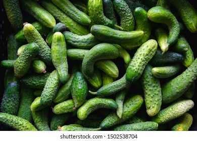 fresh green cucumbers in plastic box. natural organic food background